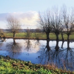"""Kings Drain near Westonzoyland, Somerset Levels"""