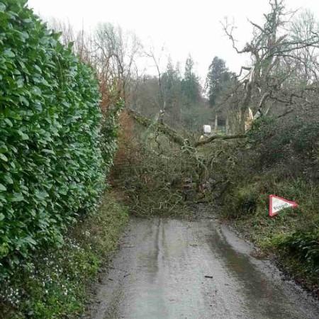 Whatley Lane, Winsham, Chard